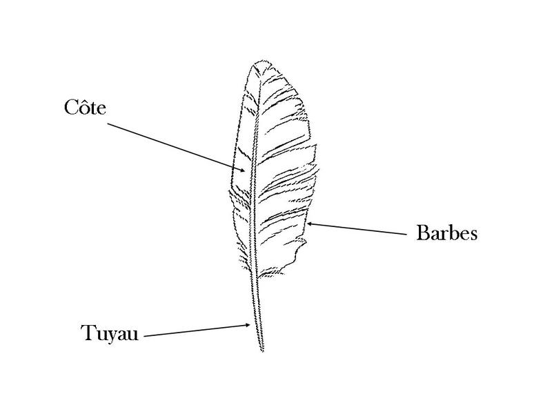 Glossaire-de-la-plume